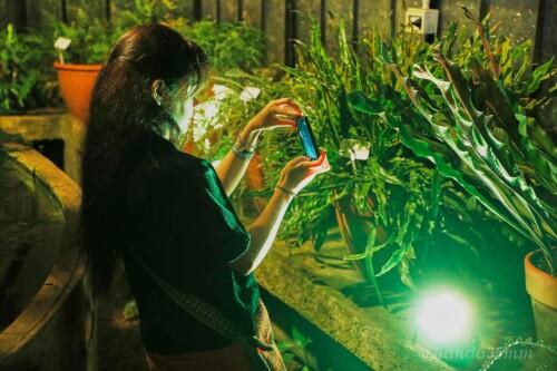 La Noche de los Jardines, en el Jardín Botánico